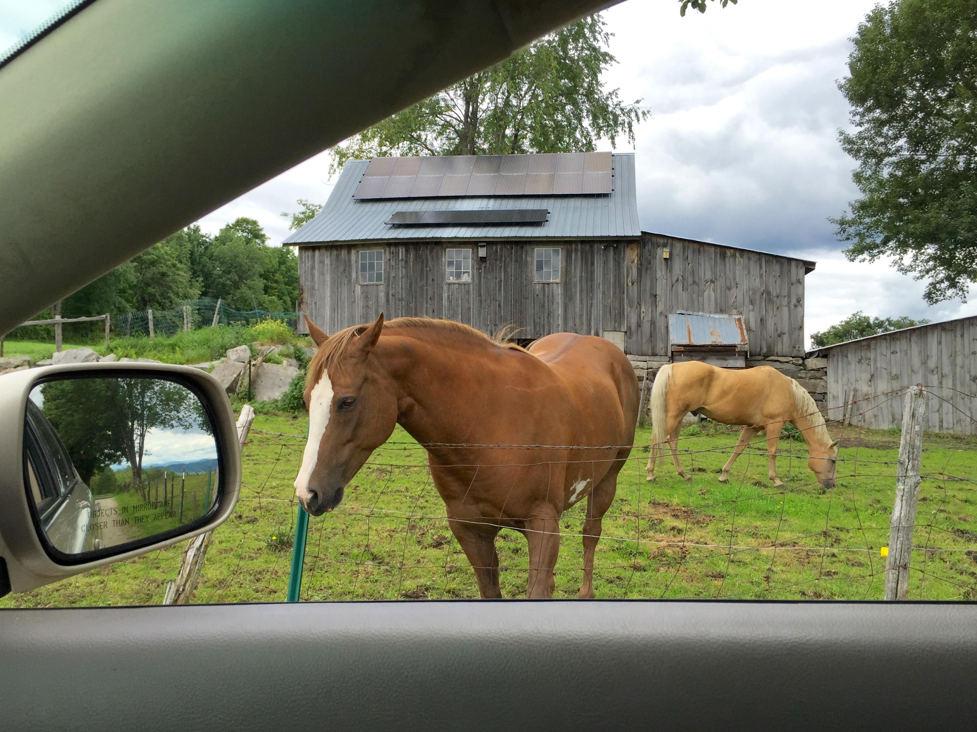 Horse-through-Car-Window